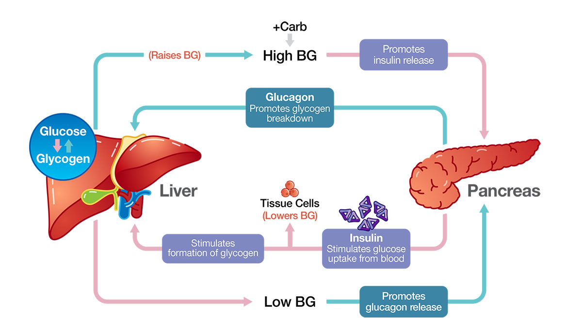 what is glucose for diabetes